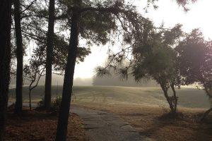 ゴルフボールが林に入ってしまった時の注意点とは?