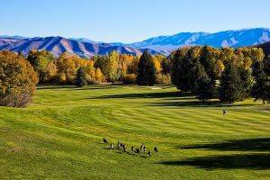 海外のゴルフ場は日本のゴルフ場とどう違う?